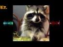 SCREAM TIME S.T. VINE - Приколы с животными Милые киски