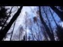 24.10.16. Прогулка в лесу с мужем и родителями -
