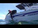 Diving Wilson's Promontory