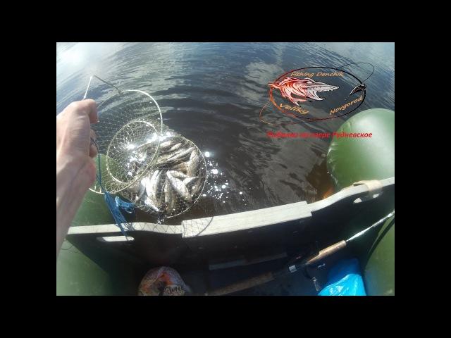 Рыбалка на Рудневском озере Ловля плотвы с лодки дер Крепужиха Рыбалка с Денчи