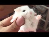 Cute And Funniest Hamster Videos Compilation NEW!