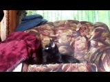 Котик не успевает за хозяином! - Видео с животными 2017 Смешные приколы коты здоровье душа тело секс чувства любовь работа жизнь