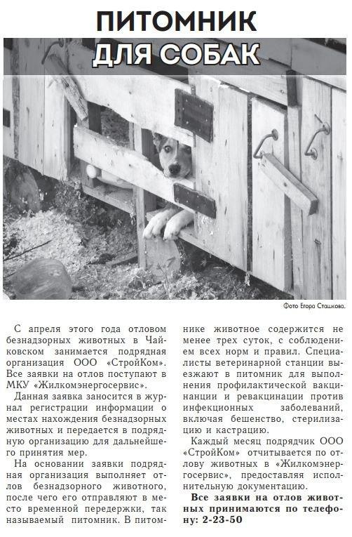 питомник для собак, Чайковский, 2017 год
