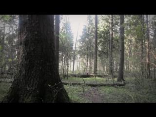 подари-дерево.рф - Оригинальный и экологичный подарок