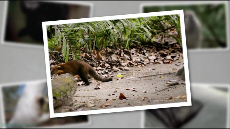 «Детёныши в дикой природе (09). Утро в джунглях» (Развлекательный, животные, 2015)