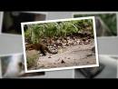 Детёныши в дикой природе 09 Утро в джунглях Развлекательный животные 2015