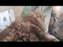 Сон кота за секунду до пробуждения