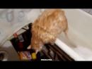 Жирный кот буксует в ванной