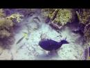 Подводный мир Египет Красное море