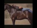 танцующая лошадка