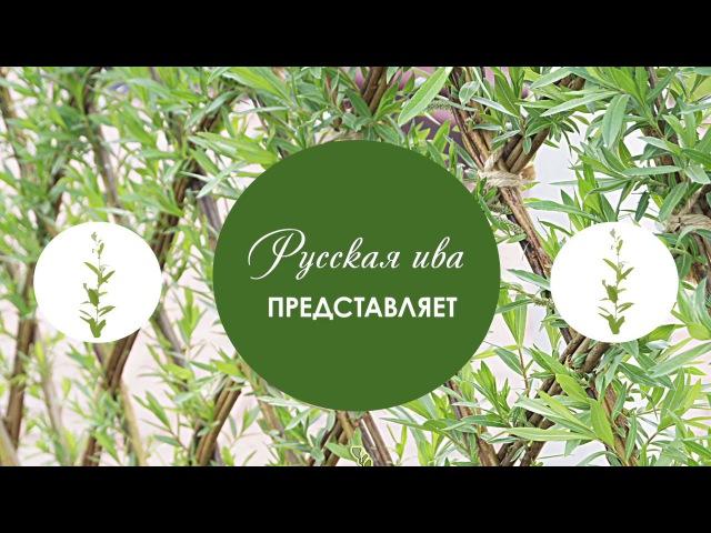 Русская ива - Урок 1. Плетение из ивы. Веревочка в 2 прута.