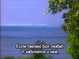 Христианское караоке группы Эдем - Если лилию Бог любит