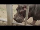 Обзор зоопарка Тбилиси,Батуми,вход 50 рублей,носорог,слон,бегемот