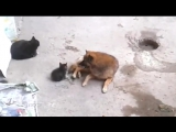 Mother cat with kittens came to old friend _ Кошка привела котят к своему другу