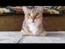Кот смотрит фильм Хичкока