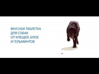 НексгарД Спектра - вкусная таблетка для собак от клещей, блох и гельминтов
