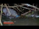 РекламаБойцовский клуб - Зимородки Nat Geo Wild