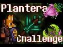 Вроде Плантера а вроде П***ец Teraria Plantera Challenge