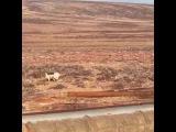 Очевидцы увидели оленя в окрестностях Норильска
