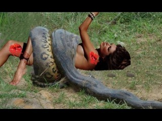 Most Extreme Giant Snake Eats Man -Amazing Wild Animal Attacks -Giant Anaconda | Real Or Not ?