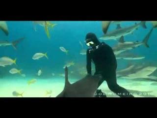 Девушка плавает с акулами!!!