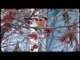 Трофим Снегири HD 720p