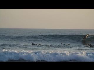 Дельфин и серферы на одной волне.