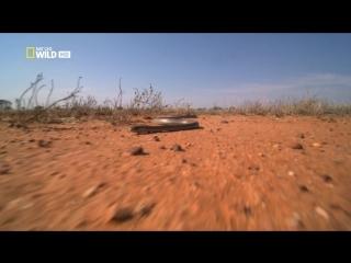 Дикая Австралия 1. Пустыня красных кенгуру
