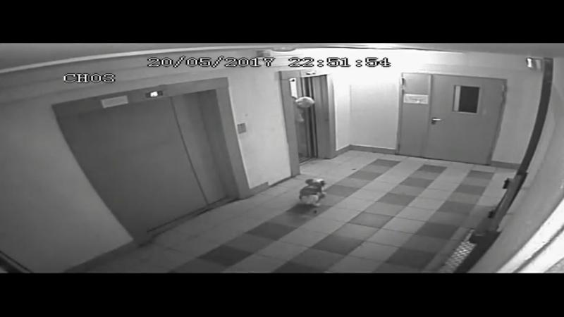 собачка гадит в парадной