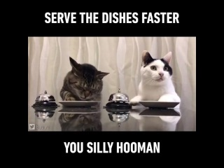 serve the dishes faster