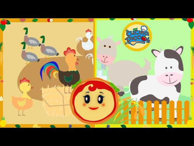 Cartoni animati per bambini Margherita spiega la vita in campagna
