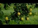 Что такое эфирные масла DoTERRA?