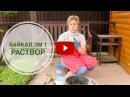 Байкал ЭМ1 🌟 Зеленое удобрение своими руками 🌟 Советы садоводам от hitsadTV