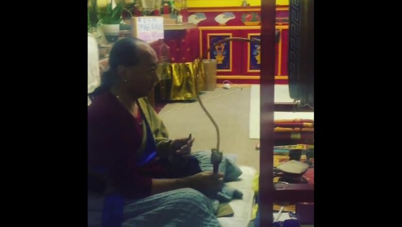 Все наши бусины Дзи благословляет Лама Нгаванг ...