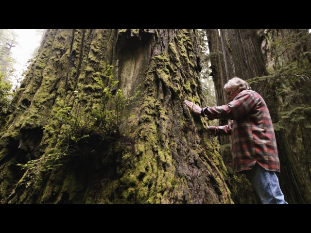One Man's Mission to Revive the Last Redwood Forests Short Film Showcase