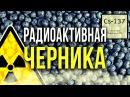 ☢ Радиоактивная Черника [Олег Айзон]