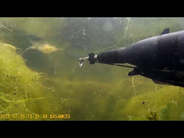 подводная охота 2017 июль,Муром.Трофейный карп 9.5кг( на 2.5 минуте).