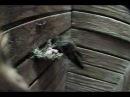 06 Chimney Swifts Feeding Hatchlings
