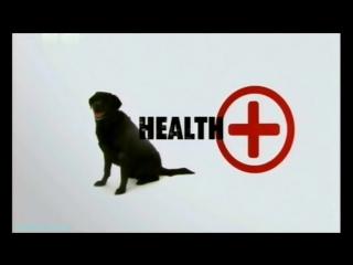 «Введение в собаковедение» (01 серия) (Научно-популярный, животные, 2008)