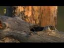 Долина Гризли - Поле битвы. Документальный фильм о медведях Гризли Нат Гео Вайлд