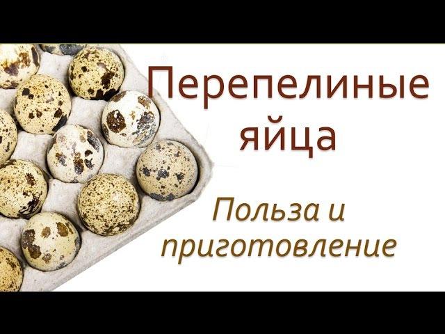 Польза перепелиных яиц. Как употреблять перепелиные яйца.