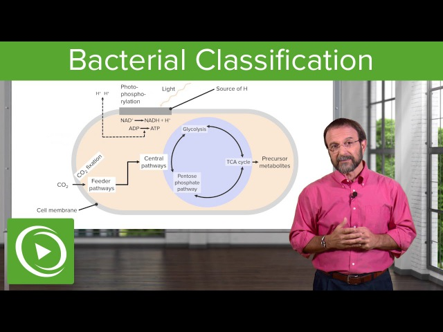Bacterial Classification – Microbiology | Medical Education Videos