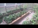 Солнечный вегетарий теплица своими руками Часть 3