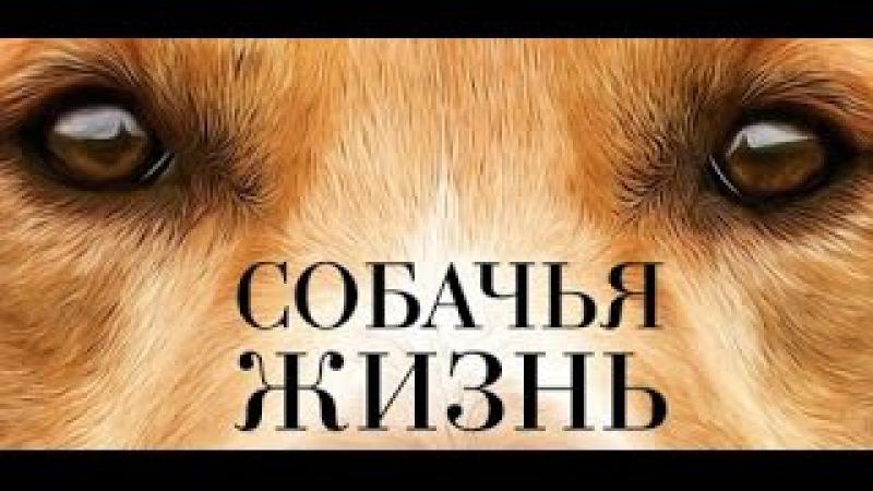 Собачья жизнь 2017 Обалденный фильм про собак