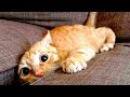 Приколы с Котами - Смешные коты и кошки 2017 ПОПРОБУЙ НЕ ЗАСМЕЯТЬСЯ - Смешные коты