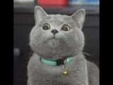 The Ultimate Viral Cat Video  Что делают коты чтобы достичь популярности в интернете  Cat, pussy, funny, 2017, new, I am OK