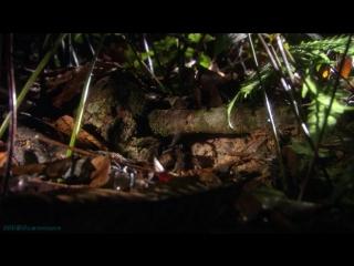 «Мифы Амазонки (2). Триумф жизни» (Документальный, природа, животные, 2011)