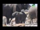 BBC Заповедник в дебрях Африки 13 серия Реальное ТВ животные 2005
