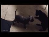 Черные кошки приколы про черных котов видео 2017 - (МатроскинТВ)