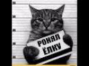 Приколы с котами Смешные коты приколы про кошек под музыку котики приколы коты п...